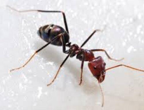 شركة مكافحة النمل في ابوظبي |0556216906|لمكافحة الحشرات