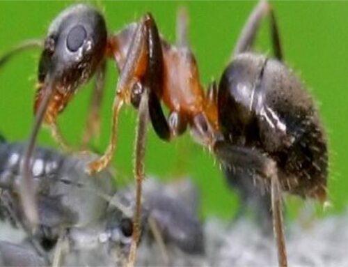 شركة مكافحة حشرات في ام القيوين |0556216906| مكافحة تامة للحشرات