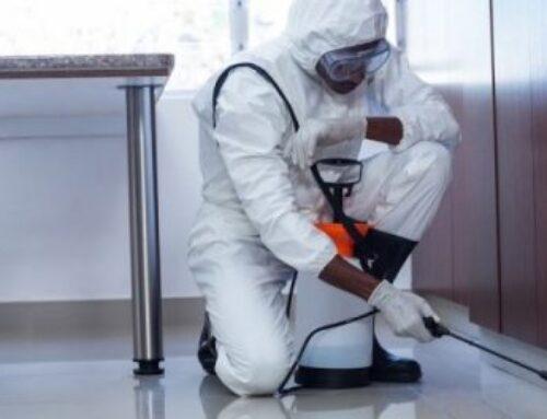 شركة مكافحة النمل في راس الخيمة |0556216906|خدمات ابادة