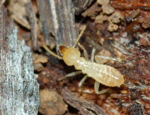 شركة مكافحة النمل في دبي |0556216906|خدمات ابادة النمل