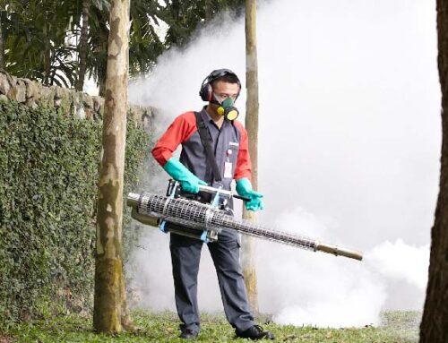 شركة رش حشرات في ام القيوين |0556216906 |مبيدات الآفات