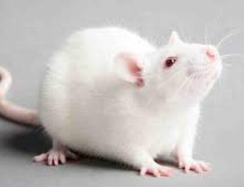 شركة مكافحة الفئران في ابوظبي |0556216906|خدمات ابادة حشرات