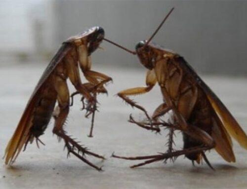 شركة مكافحة الصراصير في ابوظبي |0556216906|خدمات ابادة حشرات