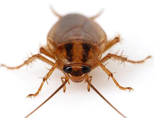شركة مكافحة الصراصير في الشارقة |0556216906|خدمات ابادة حشرات
