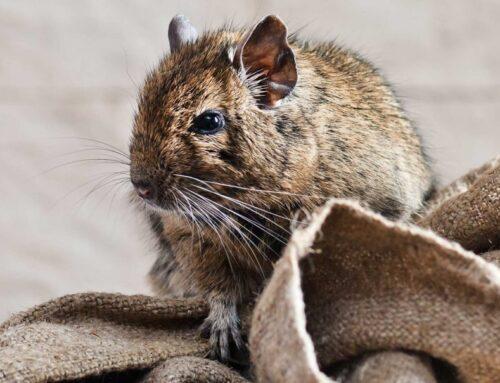 شركة مكافحة الفئران في راس الخيمة |0556216906| ابادة حشرات