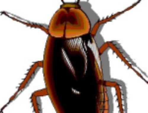 شركة مكافحة الصراصير في راس الخيمة |0556216906| لمكافحة الحشرات